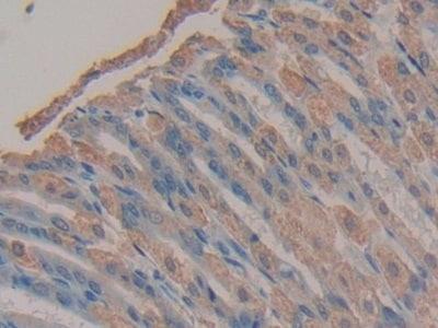 Immunohistochemistry (Formalin/PFA-fixed paraffin-embedded sections) - Anti-Tmem27 antibody (ab233421)