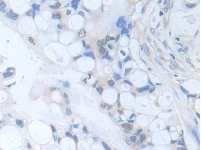 Immunohistochemistry (Formalin/PFA-fixed paraffin-embedded sections) - Anti-PI-9 antibody (ab233443)