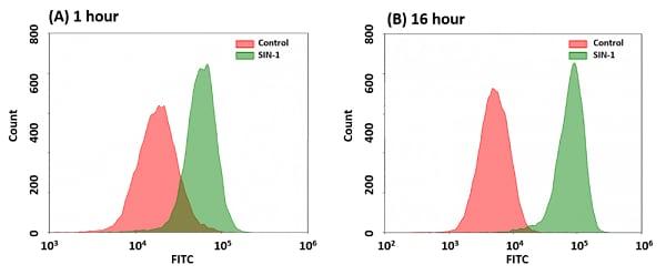 Detection of peroxynitrite in Jurkat cells following SIN-1 treatment