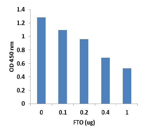 m6A demethylase activity achieved by using recombinant FTO with the m6A Demethylase Assay Kit