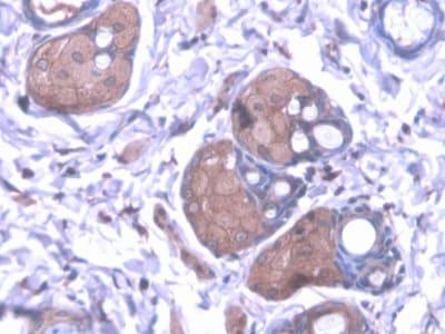 Immunohistochemistry (Formalin/PFA-fixed paraffin-embedded sections) - Anti-kynurenine 3-monooxygenase antibody (ab233529)