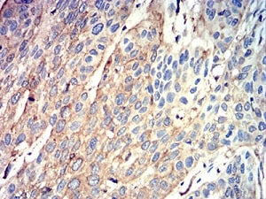 Immunohistochemistry (Formalin/PFA-fixed paraffin-embedded sections) - Anti-ATG3 antibody [7A1D1] (ab233560)