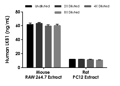 Interpolated concentrations of native  LKB1 in mouse RAW264.7 and rat PC-12 cell extract, extract based on a 750 µg/mL extract load.