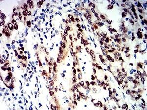 Immunohistochemistry (Formalin/PFA-fixed paraffin-embedded sections) - Anti-SNF2L antibody [2H7B9] (ab233644)