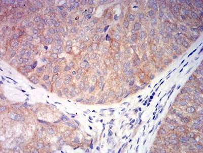 Immunohistochemistry (Formalin/PFA-fixed paraffin-embedded sections) - Anti-CHRNA6 antibody [5B6G8] (ab233721)