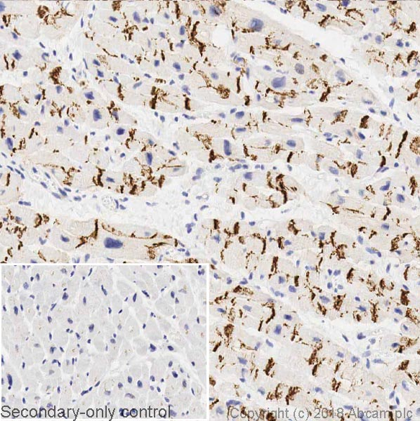 Immunohistochemistry (Formalin/PFA-fixed paraffin-embedded sections) - Anti-N Cadherin antibody [8C11] - BSA and Azide free (ab233767)