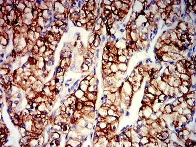 Immunohistochemistry (Formalin/PFA-fixed paraffin-embedded sections) - Anti-ENPP3/B10 antibody [4C1H2] (ab233777)