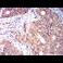 Immunohistochemistry (Formalin/PFA-fixed paraffin-embedded sections) - Anti-KIR3DL1 antibody [2C3B6] (ab233780)