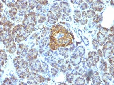Immunohistochemistry (Formalin/PFA-fixed paraffin-embedded sections) - Anti-Hsp60 antibody [LK1] (ab233878)