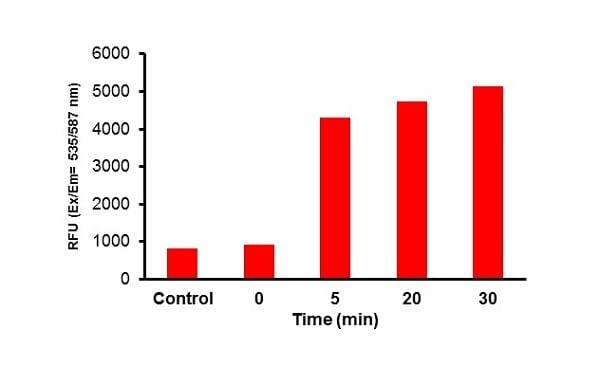 Glucose uptake time course
