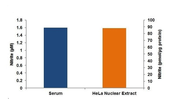 Nitrite concentration in pooled human serum and HeLa nuclear extracts