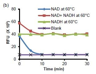 Decomposition of NAD