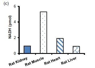 Measurement of NADH in different rat tissues.