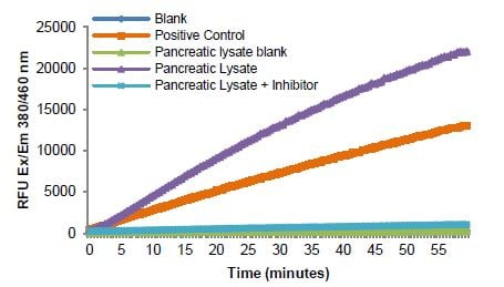 Reaction kinetics for positive control and rat pancreatic lysate (9 µg).