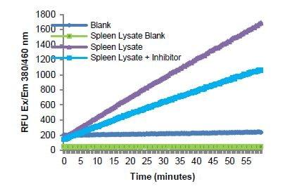 Reaction kinetics for rat spleen lysate (160 µg).