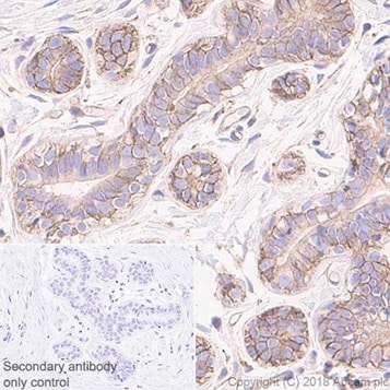 Immunohistochemistry (Formalin/PFA-fixed paraffin-embedded sections) - Anti-NUMB antibody [EPR21988] - BSA and Azide free (ab234108)