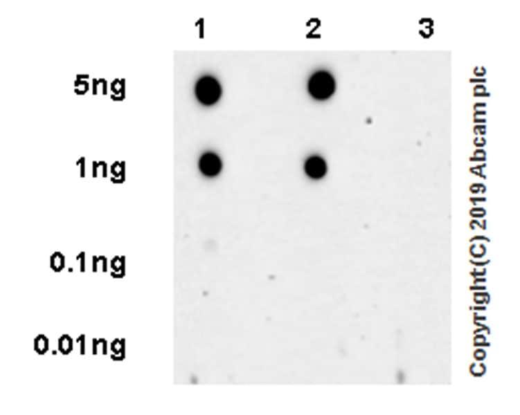 Dot Blot - Anti-RING2 / RING1B / RNF2 (phospho S168) antibody [EPR20902-58] (ab234421)