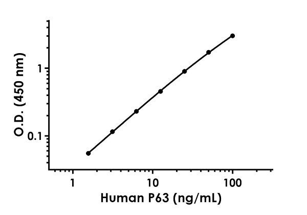 Example of human P63 standard curve in 1X Cell Extraction Buffer PTR.