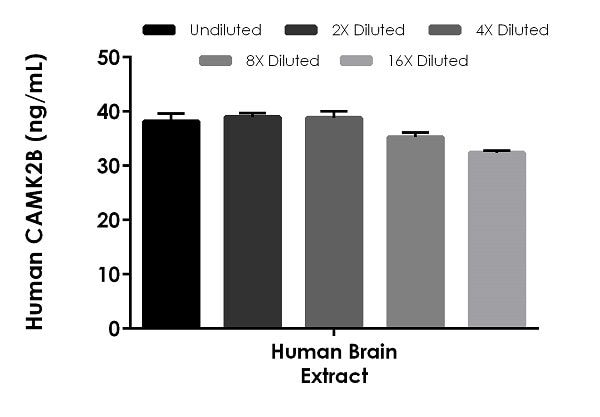 Interpolated concentrations of native CAMK2B in human brain tissue extract, based on a 100 µg/mL extract load.