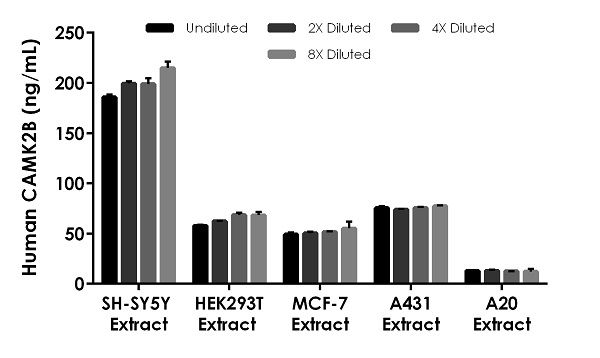 Interpolated concentrations of native CAMK2B in human SH-SY5Y cell extract, HEK293T cell extract, MCF-7 cell extract, A431 cell extract and A20 cell extract, based on a 500 µg/mL extract load.