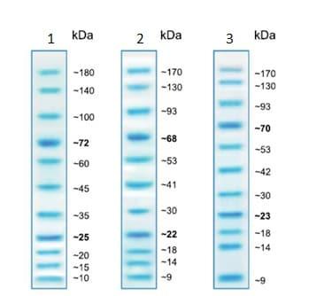 SDS-PAGE - Prestained Protein Ladder – Mid-range molecular weight (10 – 180 kDa) (ab234617)