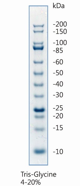 Unstained Protein Ladder (10 - 200 kDa) (ab234618)
