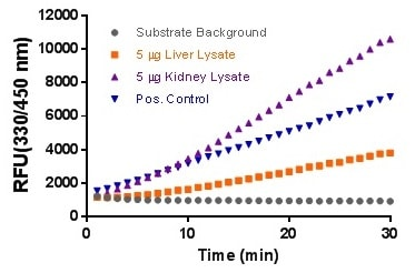 Time course using 5 µl positive control ß-Glucuronidase and lysate samples.