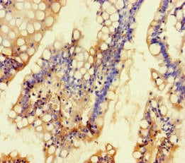 Immunohistochemistry (Formalin/PFA-fixed paraffin-embedded sections) - Anti-TALK1 antibody (ab234652)