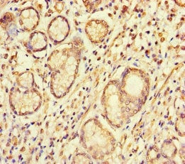 Immunohistochemistry (Formalin/PFA-fixed paraffin-embedded sections) - Anti-S100G antibody (ab234678)