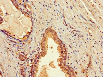 Immunohistochemistry (Formalin/PFA-fixed paraffin-embedded sections) - Anti-TBC1D7 antibody (ab234684)