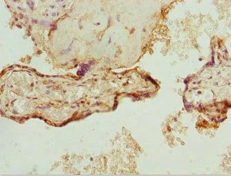 Immunohistochemistry (Formalin/PFA-fixed paraffin-embedded sections) - Anti-ZNF195 antibody (ab234687)