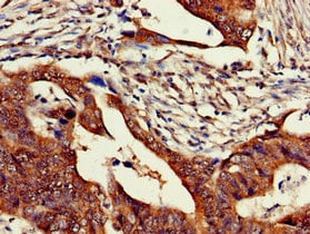Immunohistochemistry (Formalin/PFA-fixed paraffin-embedded sections) - Anti-ZNF816A antibody (ab234688)