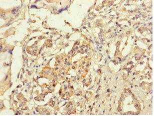 Immunohistochemistry (Formalin/PFA-fixed paraffin-embedded sections) - Anti-RIC1 antibody (ab234741)