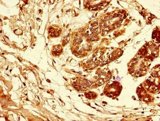 Immunohistochemistry (Formalin/PFA-fixed paraffin-embedded sections) - Anti-Amphiregulin antibody (ab234750)