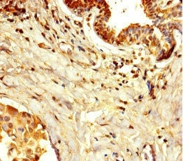 Immunohistochemistry (Formalin/PFA-fixed paraffin-embedded sections) - Anti-WDR85 antibody (ab234751)