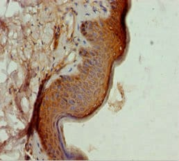 Immunohistochemistry (Formalin/PFA-fixed paraffin-embedded sections) - Anti-TAF9 antibody (ab234758)