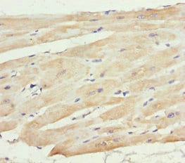 Immunohistochemistry (Formalin/PFA-fixed paraffin-embedded sections) - Anti-MTX2 antibody (ab234783)