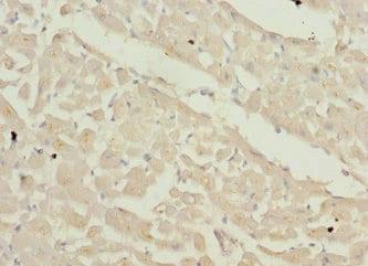 Immunohistochemistry (Formalin/PFA-fixed paraffin-embedded sections) - Anti-Endofin antibody (ab234801)