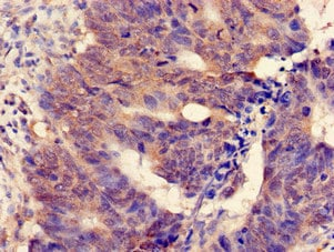 Immunohistochemistry (Formalin/PFA-fixed paraffin-embedded sections) - Anti-MGST2 antibody (ab234828)