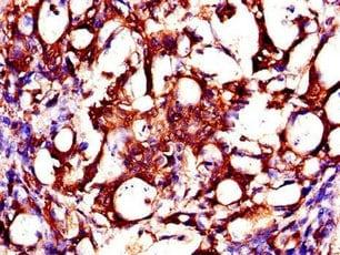 Immunohistochemistry (Formalin/PFA-fixed paraffin-embedded sections) - Anti-ZMPSTE24 antibody (ab234832)