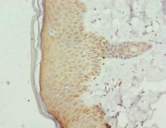 Immunohistochemistry (Formalin/PFA-fixed paraffin-embedded sections) - Anti-GABPB2/Nuclear respiratory factor 2 antibody (ab234852)