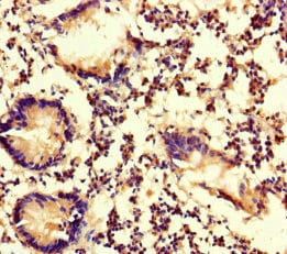 Immunohistochemistry (Formalin/PFA-fixed paraffin-embedded sections) - Anti-Myosin 1G/HA2 antibody (ab234854)