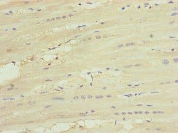 Immunohistochemistry (Formalin/PFA-fixed paraffin-embedded sections) - Anti-MNF1 antibody (ab234861)