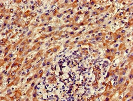 Immunohistochemistry (Formalin/PFA-fixed paraffin-embedded sections) - Anti-FAM111A antibody (ab234868)