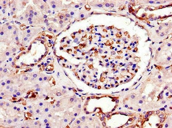 Immunohistochemistry (Formalin/PFA-fixed paraffin-embedded sections) - Anti-SWI5 antibody (ab234870)