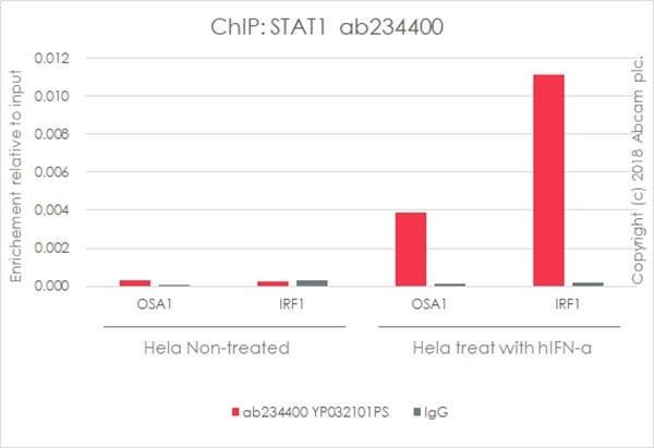 ChIP - Anti-STAT1 antibody [EPR21057-141] - BSA and Azide free (ab234904)