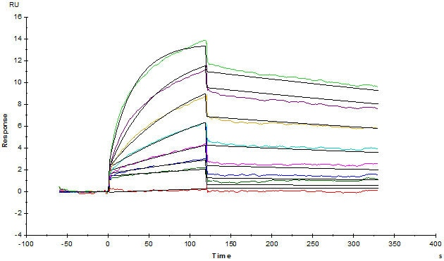 Functional Studies - Recombinant human CD19 protein (Active) (ab234966)
