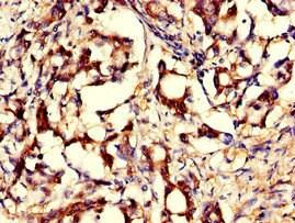 Immunohistochemistry (Formalin/PFA-fixed paraffin-embedded sections) - Anti-GNPNAT1 antibody (ab234981)