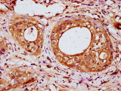 Immunohistochemistry (Formalin/PFA-fixed paraffin-embedded sections) - Anti-IRX7 antibody (ab234984)