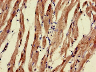 Immunohistochemistry (Formalin/PFA-fixed paraffin-embedded sections) - Anti-PNLIPRP3 antibody (ab235001)